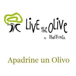 LivetheOlive _ Adopt an olive tree